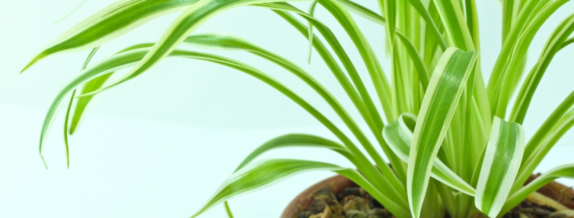 7 Air Purifying Indoor Plants You Need In Your Office